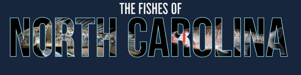 The fishes of NC banner