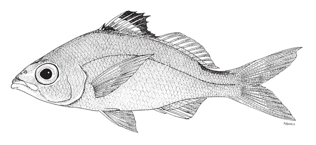 Eucinostomus melanopterus