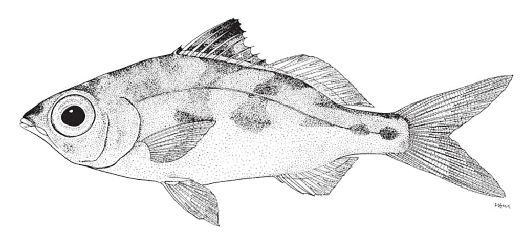 Eucinostomus jonesii